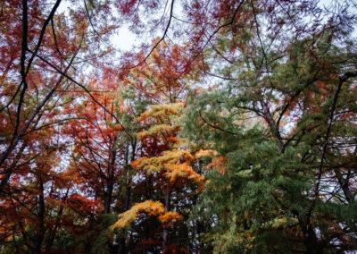 L'étang de Boulieu en automne