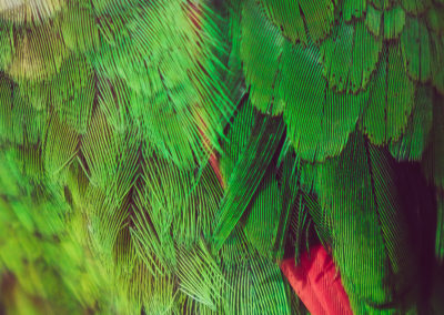 Plumes tropicales - tirages photo