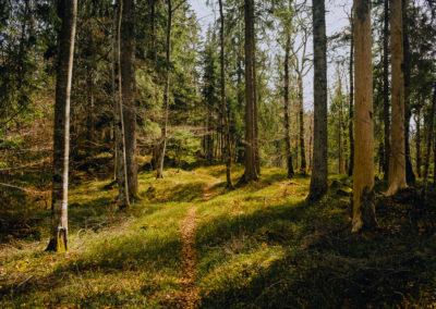 Forêt du Jura